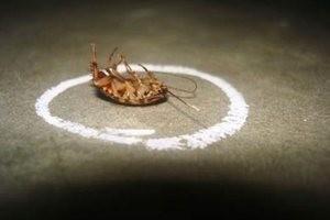 Квартирные муравьи - как избавиться