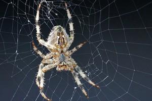 Борьба с пауками в доме