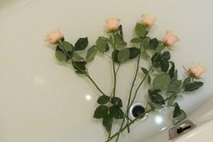 Срезанные розы – как продлить жизнь