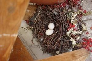 Как вывести голубей с балкона