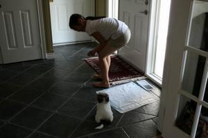 Как быстро приучить щенка к лотку
