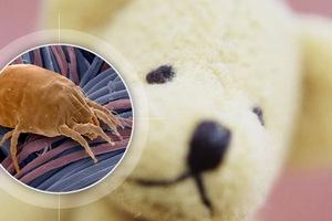 Пылевые клещи – как избавиться