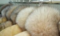 Чистка меха в домашних условиях – несколько важных нюансов