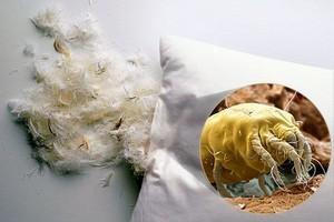 Как почистить перьевые подушки дома