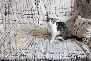 Как убрать запах мочи кота с дивана
