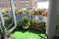 сад на балконе своими руками