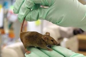 борьба с мышами в квартире