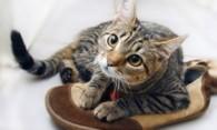 Как устранить запах кошачьей мочи с обуви – практические советы
