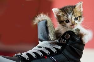 чем вымыть кошачью мочу
