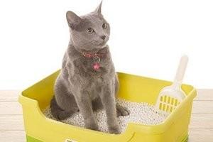 устранение запаха кошачьей мочи