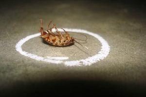 как бороться с тараканами в квартире