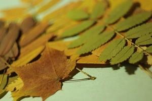 как гладить листья утюгом