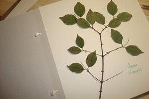 как разгладить осенние листья
