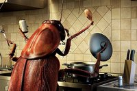 таракан в доме