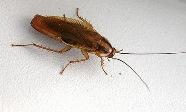 вывести из квартиры тараканов
