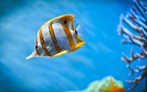 мытье стекол аквариума