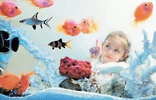 как чистить стенки аквариума