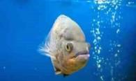 Как и чем чистить фильтр в аквариуме?
