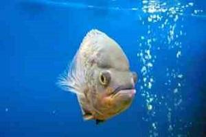 Как почистить фильтр в аквариуме самостоятельно