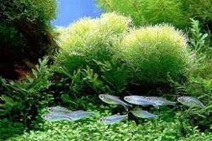 чистка грунта в аквариуме