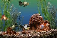 воду и грунт в аквариуме