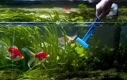 чистить аквариум