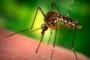 Как можно избавиться от комаров в домашних условиях?