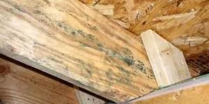 Обработка поврежденной древесины от плесени и грибка