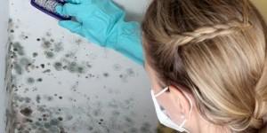 Как эффективно избавиться от грибка на стенах в квартире?