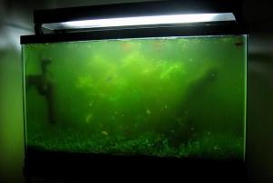 зеленый ил на стенках