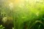 Зелёный налёт и мутная вода в аквариуме: лучшие способы решения проблемы