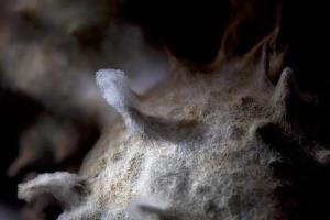вред грибка