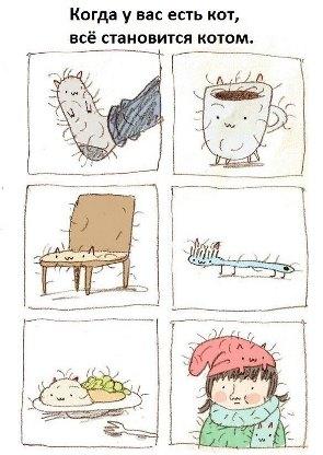 линька кошек