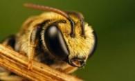Как бороться с пчелами на дачном участке: избавляемся от непрошеных гостей