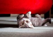 шерсти кошки в квартире
