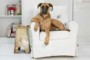 Собака в доме: как избавиться от запаха на коврах и диване?