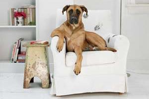 запах собаки на мебели