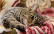 убрать с мягкой мебели запах кошачьей мочи