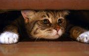 советы по устранению запаха кошачьей мочи