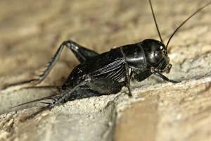 насекомое в доме
