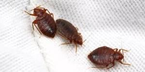 Как избавиться от клопов в диване: советы по выведению паразитов