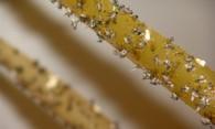 Мошки в доме: эффективные методы борьбы с насекомыми