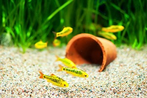 почему вода в аквариуме плохо пахнет