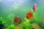 В аквариуме пахнет вода: как устранить проблему?