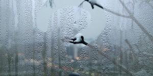 Почему запотевают пластиковые окна: боремся с конденсатом