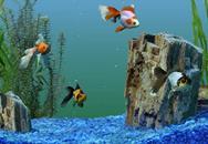 поменять воду в аквариуме