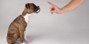 Как вывести запах собачьей мочи в квартире?