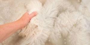 Как почистить овечью шкуру и вывести пятна на ней?