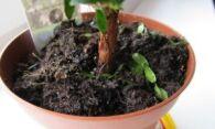 Белые мошки в земле комнатных растений, избавляемся от вредителей