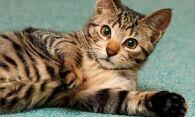 Как избавиться от запаха кошачьей мочи без следа?